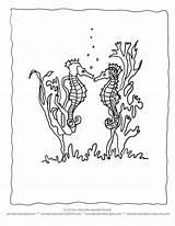Coloring Pages Seahorse Seaweed Ocean Realistic Seahorses Clipart Sheets Drawing Printable Animals Quotes Sea Animal Cartoon Echo Activities Wonderweirded Wildlife sketch template
