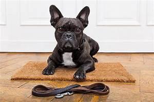 Hundebekleidung Französische Bulldogge : kinderfreundlicher hund die franz sische bulldogge ~ Frokenaadalensverden.com Haus und Dekorationen