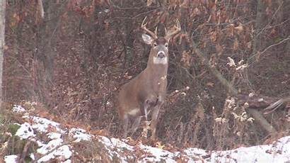 Deer Hunting Triangle Golden Illinois Realtree Camo