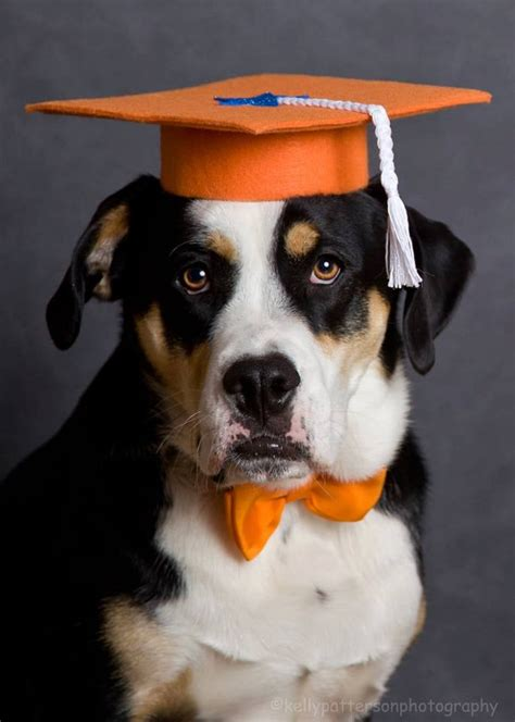 dog graduation cap graduation hat costume  petdogtrainer