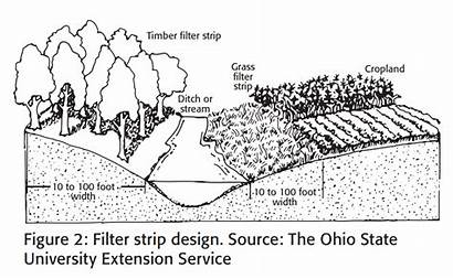 Filter Strip Strips Vegetative Water Improve Using