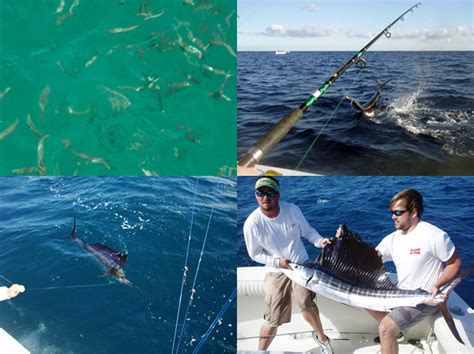 Fishing Boats Out Of Key Largo by Sailfishing In Key Largo Key Largo Fishing Charters The
