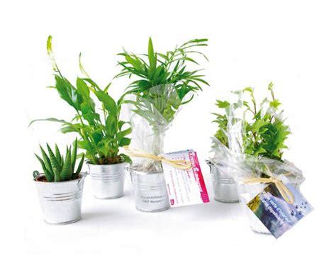plantes pour bureau un bureau sain avec les plantes dépolluantes