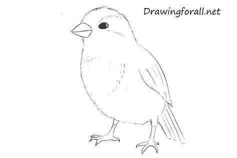 draw  sparrow step  step drawingforallnet