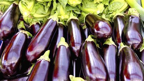 cuisiner des aubergines facile aubergine comment la planter et en faire la culture