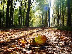 Schöne Herbstbilder Kostenlos : fotos sch ne herbstbilder unserer leser schwalmstadt ~ A.2002-acura-tl-radio.info Haus und Dekorationen