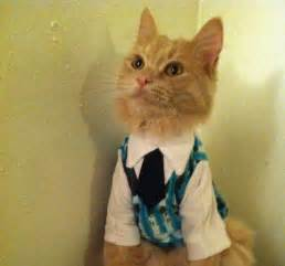 Cat with Sweater Vest