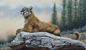 Mountain Lion Paintings and Prints | The Spectator ...
