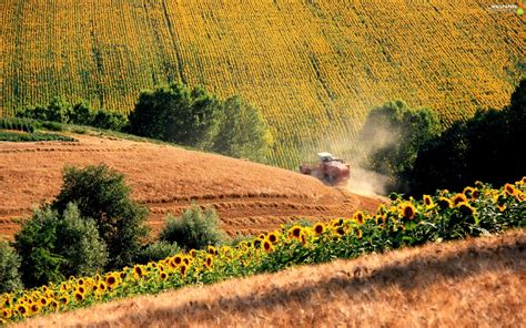 We have 76+ amazing background pictures carefully picked by our community. Nice sunflowers, Field, combine-harvester - For phone wallpapers: 1920x1200