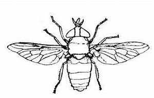 Free lightning bugs coloring pages