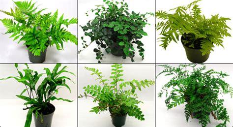 safe plants  bearded dragon vivariums vivarium world