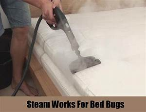 12 herbal remedies for bed bugs how to cure bed bugs for Dry cleaning kill bed bugs