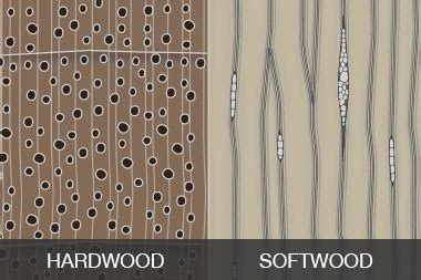 isdifference  structures  soft wood  hard wood