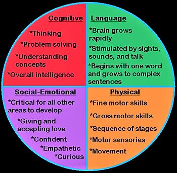 brain development influences holistic development
