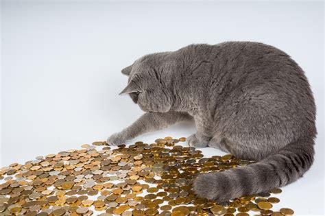 Kā ietaupīt naudu, rūpējoties par mājdzīvniekiem? - vyzla ...