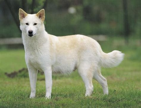 Cute Dogs Dont Shed by Dog Breeds That Start With C Pets World