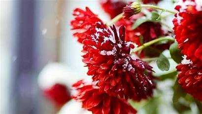 Winter Flowers Desktop Snow Scenery 10wallpaper Landscape