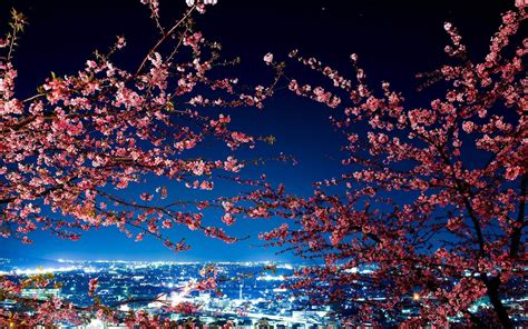 japan cherry blossom wallpapers top  japan cherry
