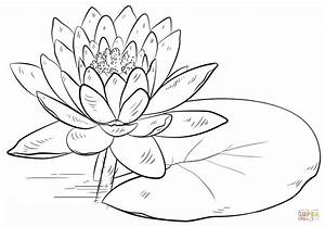 Water Lily and Pad coloring page | Free Printable Coloring ...
