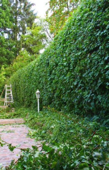 Was Kostet Ein Landschaftsgärtner by Unsere Leistungen Im Garten Und Landschaftsbau