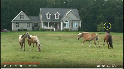 herd horse behavior