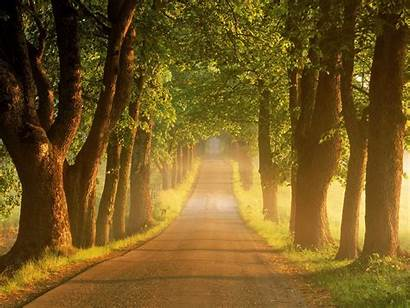 Road Country Tree Roads Sunrise Lined Sweden