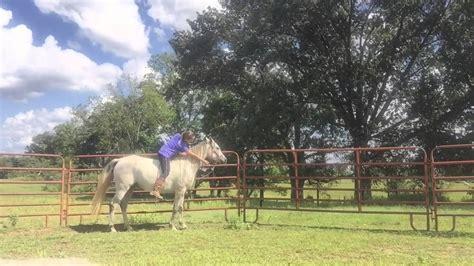 being ridden horse