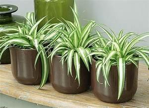 Bouture Plante Verte : am nagement de plantes d 39 int rieur pour le bureau de travail ~ Melissatoandfro.com Idées de Décoration