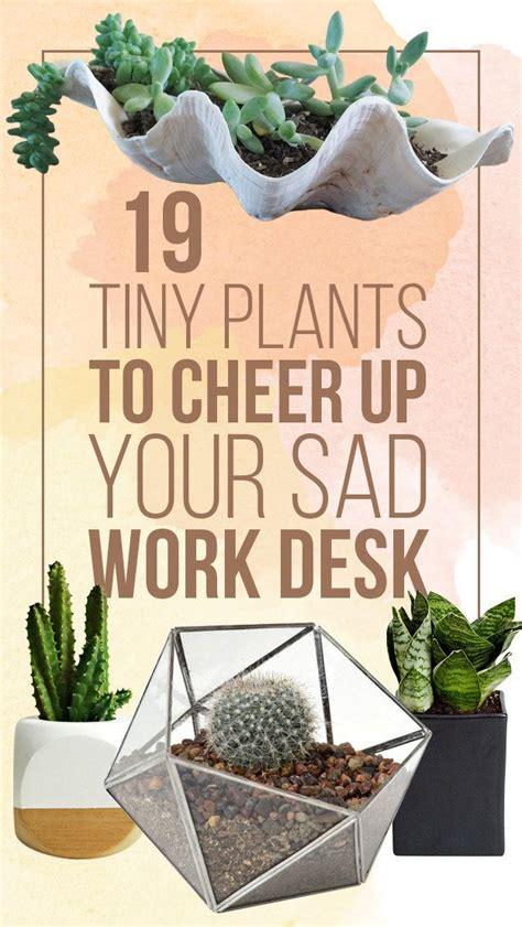 best office desk plants fantastic best desk plants 12 for the office bloomberg