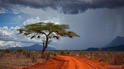 Hd Wallpaper Serengeti National Park Tanzania Africa