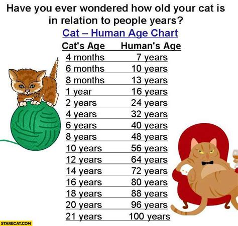 How Old Is Your Cat In Relation Compared To People Years