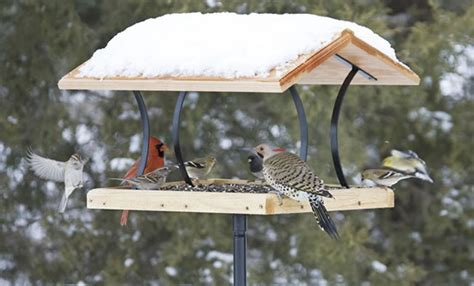 add some life to your winter landscape by attracting wild