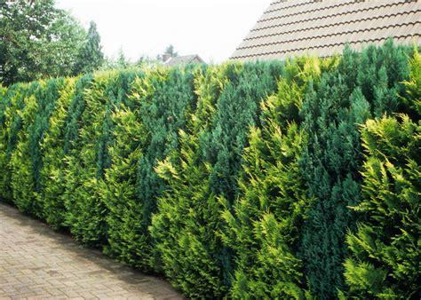 idealer windschutz hecken april 2012 familienheim und garten