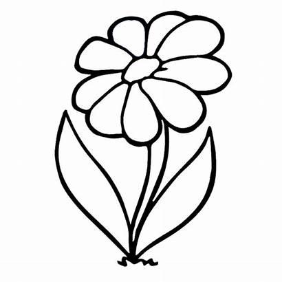 Flower Drawing Animation Sketch Gstatic Encrypted Tbn0