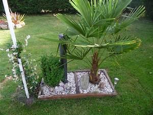 Palmier De Jardin : idee deco jardin avec palmier ~ Nature-et-papiers.com Idées de Décoration