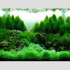 13 Best Images About Aquascape & Hardscape Aquarium On