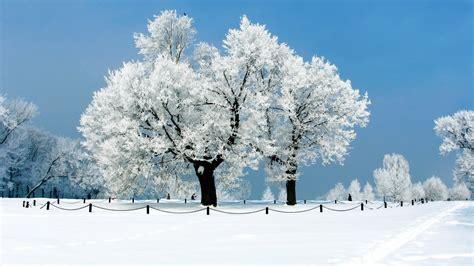 telecharger la meteo sur mon bureau gratuit fond ecran hd hiver arbre gel neige parc wallpaper winter
