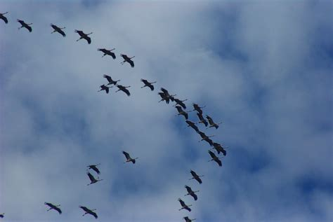 how birds prepare to migrate the infinite spider