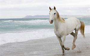 White Horses Wallpapers - Entertainment Only