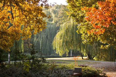 garden autumn park trees garden autumn fall seasons wallpaper 2304x1536 85393 wallpaperup