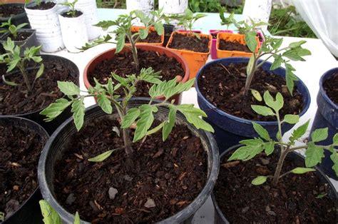 apprendre 224 semer des tomates