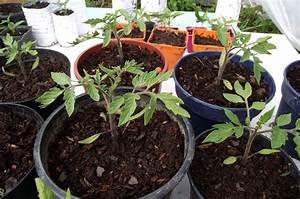 Quand Semer Les Tomates : quand semer les tomates quand et comment semer les ~ Melissatoandfro.com Idées de Décoration