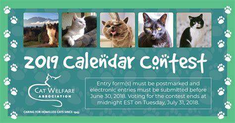 cat welfare calendar contest photo contest
