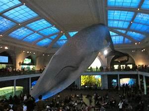 Milstein Hall of Ocean Life - American Museum of Natural ...