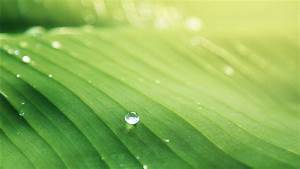 water droplet on green leaf hd green wallpapers hd