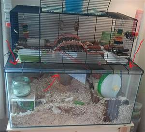 another awesome gerbil set up idea | Gerbils | Pinterest ...