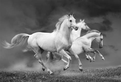 horses horse horsepower much summer customer training service having think cars similar elearning story istock