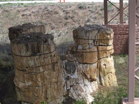 Florissant Fossil Beds by Fossilized Tree Trunks Picture Of Florissant Fossil Beds