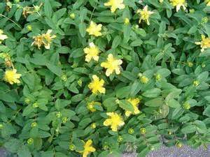 Yellow Foliage Plants