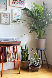 Grande Plante D Intérieur Facile D Entretien : green house entretien plantes et int rieur ~ Premium-room.com Idées de Décoration